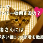 猫カフェで婚活って一体何するの?初心者さんには謎が多い猫カフェ婚活を徹底解明!