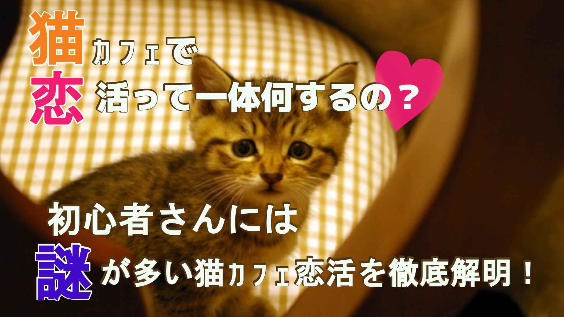 猫カフェで恋活って一体何するの?初心者さんには謎が多い猫カフェ恋活を徹底解明!のサムネイル