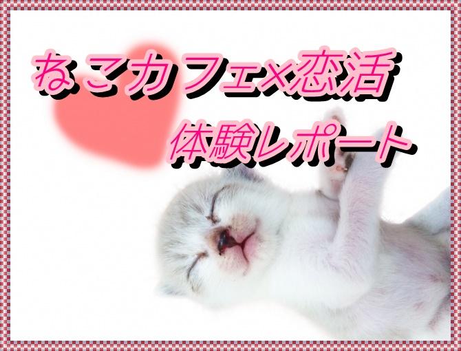 ★ねこカフェ×恋活★~20代限定~10月4日に恵比寿にて開催💓可愛いにゃんこが恋のキューピット💕のサムネイル