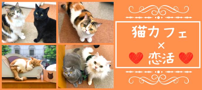 【猫カフェ婚活♪】3か月以内に恋人が欲しい★猫ちゃんと戯れながらまったり婚活@恵比寿のバナー
